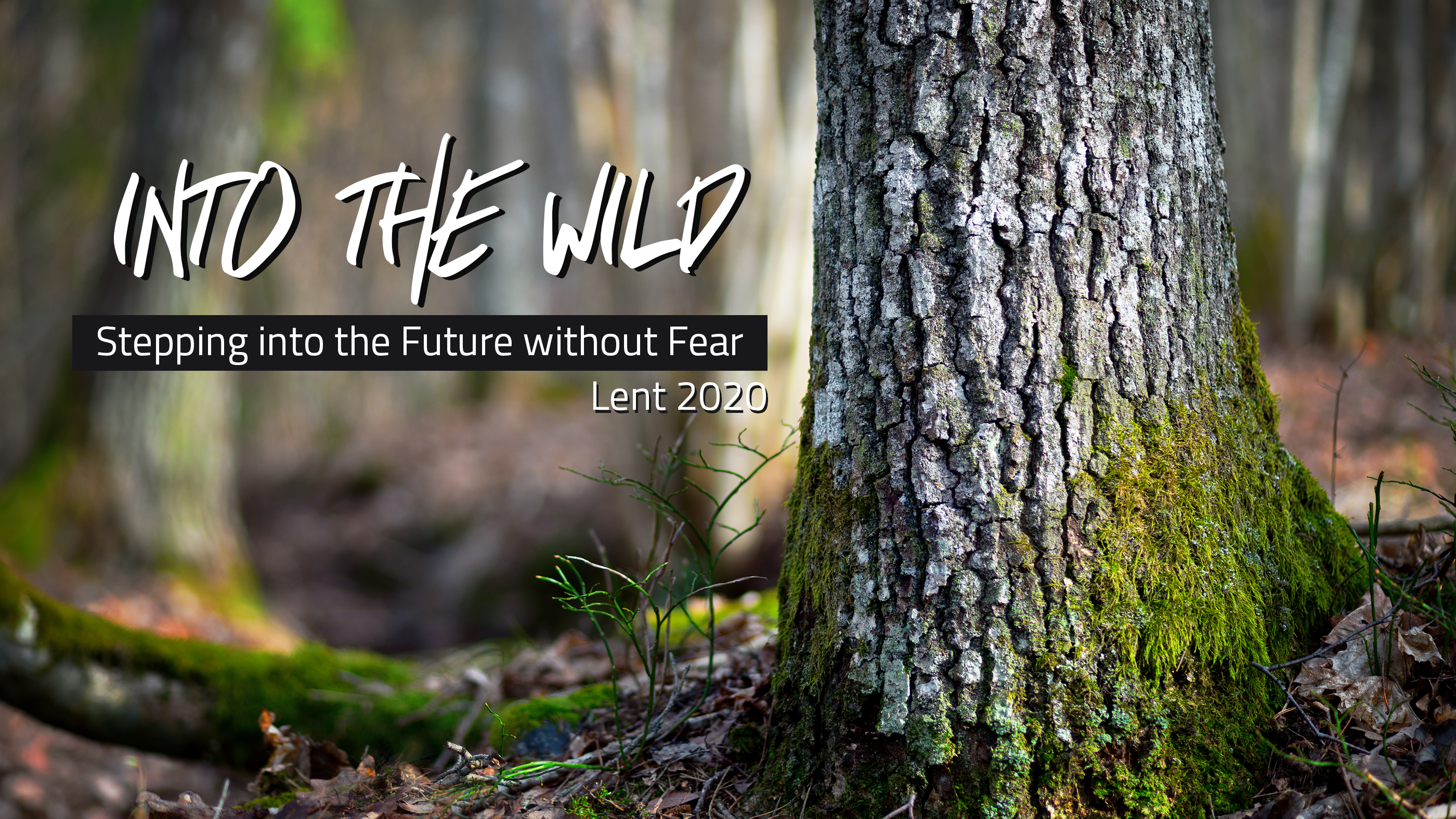 Into the Wild - Lent 2020 at Haymarket Church